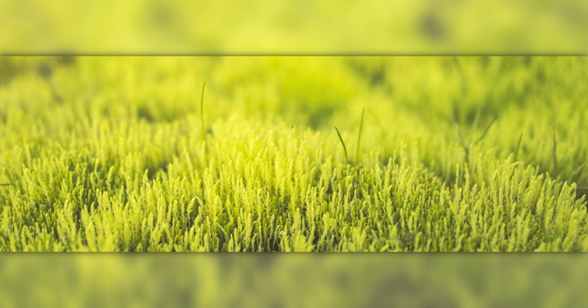 Agriculture,                Food,                Field,                Grassland,                Plant,                Image,                Avatar,                Yellow,                 Free Image