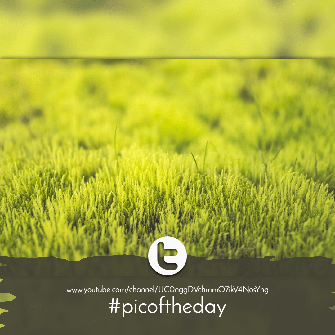 Plant,                Grass,                Grassland,                Ecosystem,                Family,                Image,                Avatar,                Announcement,                Black,                Yellow,                 Free Image