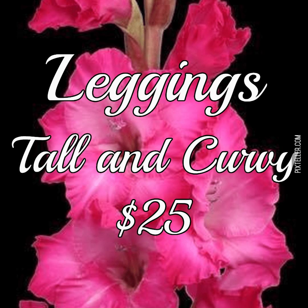 Pink,                Flower,                Plant,                Font,                Petal,                Black,                Red,                Fuchsia,                 Free Image