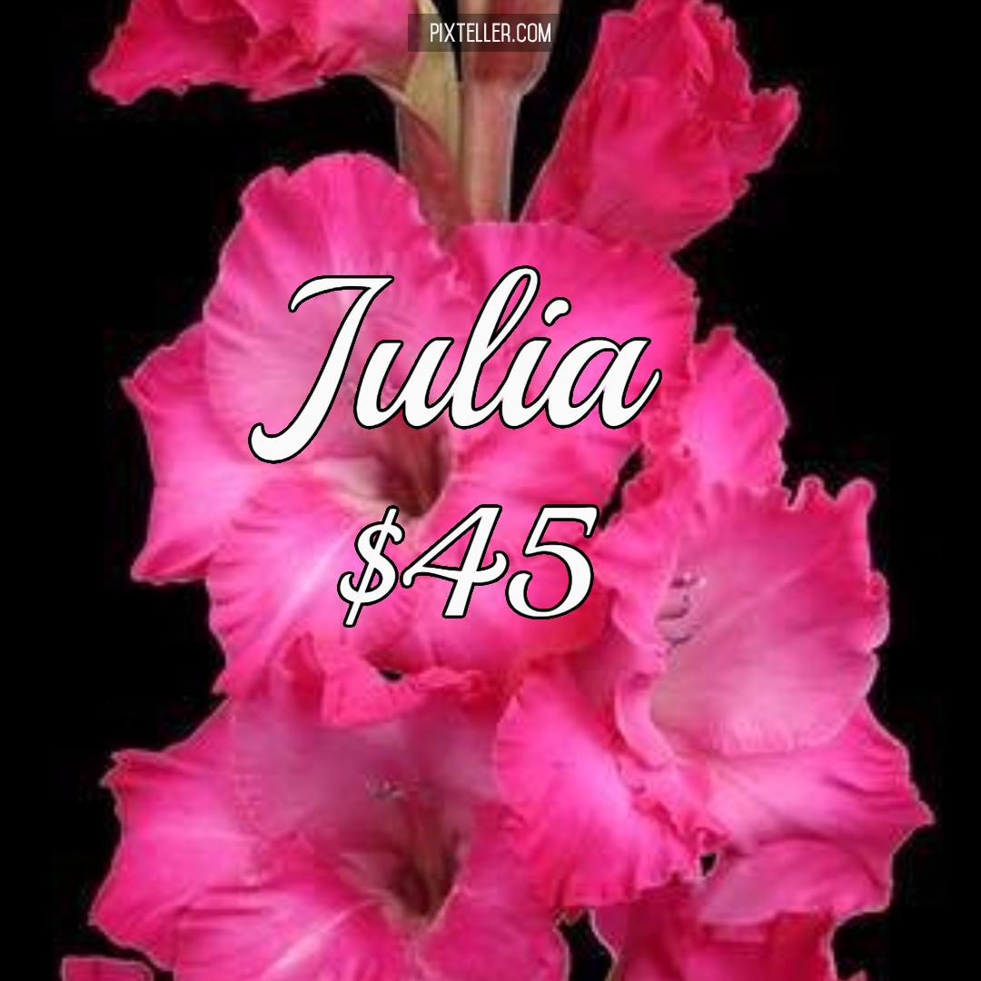 Flower,                Gladiolus,                Plant,                Pink,                Land,                Black,                Red,                Fuchsia,                 Free Image