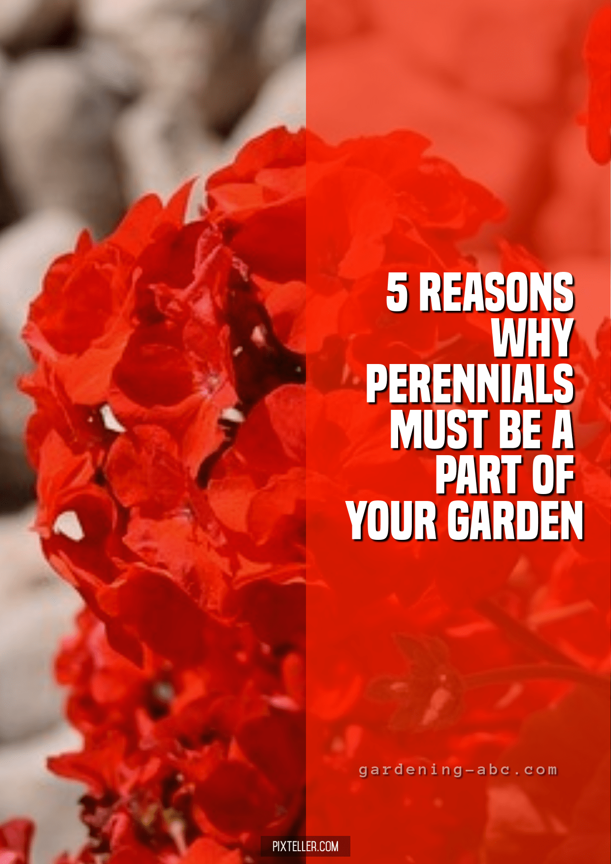 Red,                Flower,                Plant,                Petal,                Land,                Poster,                Luxury,                Quote,                Love,                White,                 Free Image