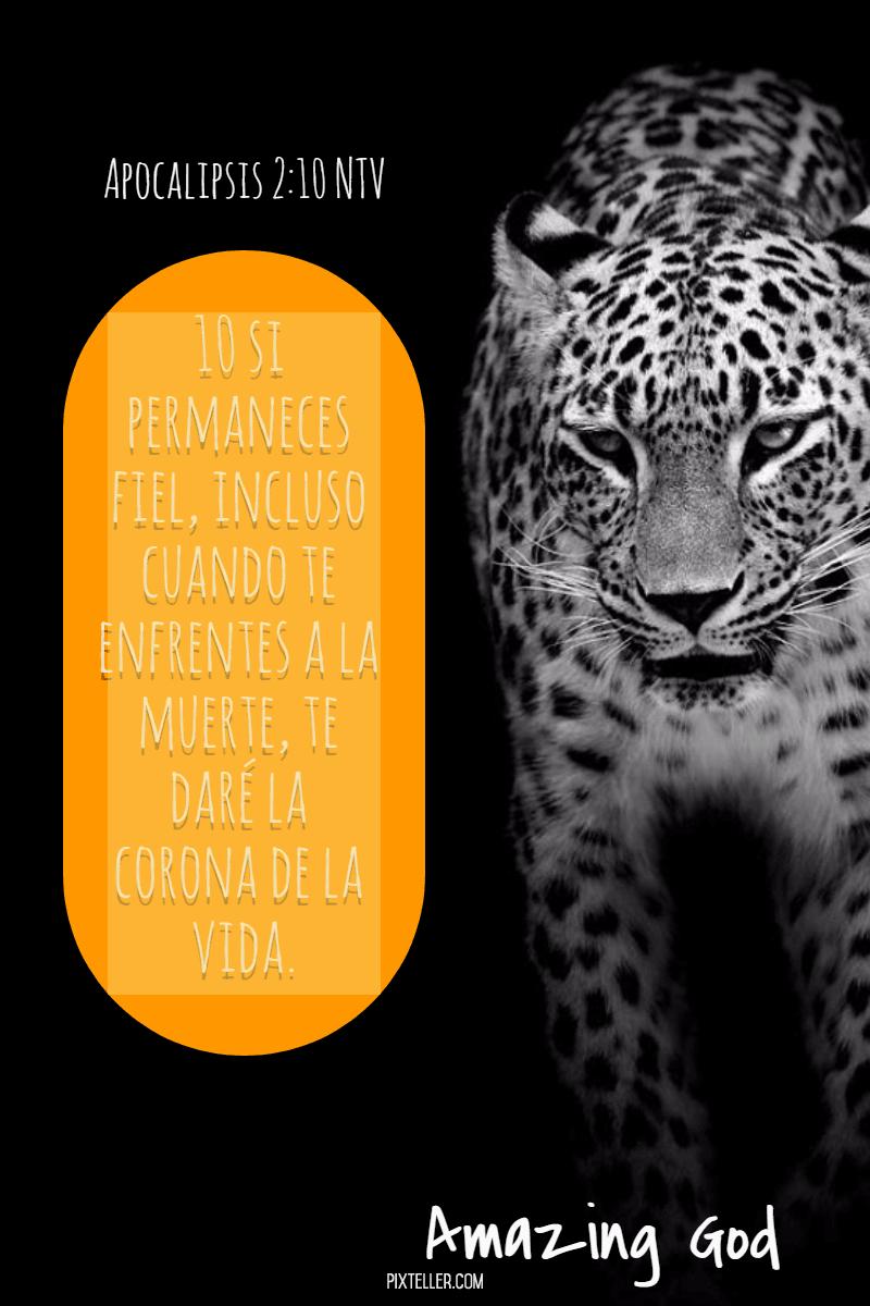 Mammal,                Jaguar,                Organism,                Big,                Cats,                Leopard,                Luxury,                Quote,                Poster,                Avatar,                Black,                Yellow,                 Free Image