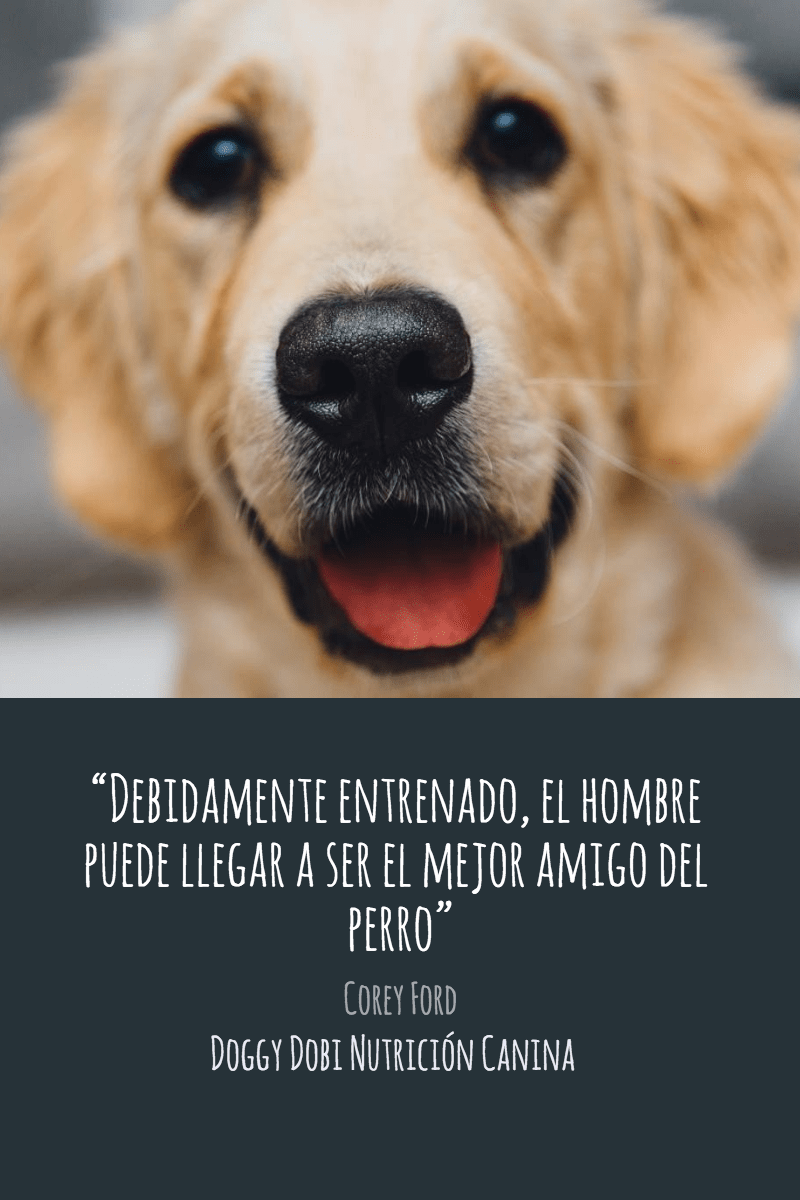 Dog,                Breed,                Nose,                Golden,                Retriever,                Puppy,                Poster,                Text,                Quote,                Simple,                White,                Black,                Yellow,                 Free Image