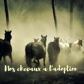 Inner Critic ~ Horses