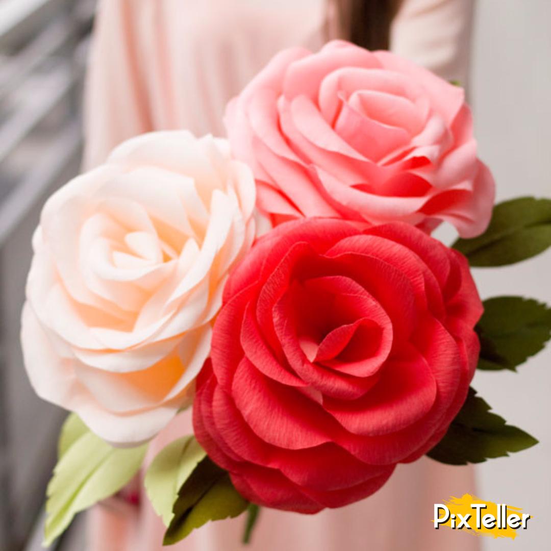 Rose,                Flower,                Family,                Pink,                Garden,                Roses,                Cut,                Flowers,                Order,                Rosa,                Centifolia,                Bouquet,                Flowering,                 Free Image