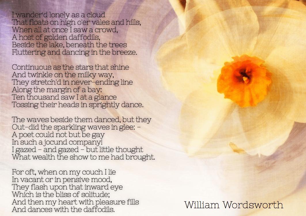 Flower,                Petal,                Font,                Floral,                Design,                White,                Yellow,                 Free Image