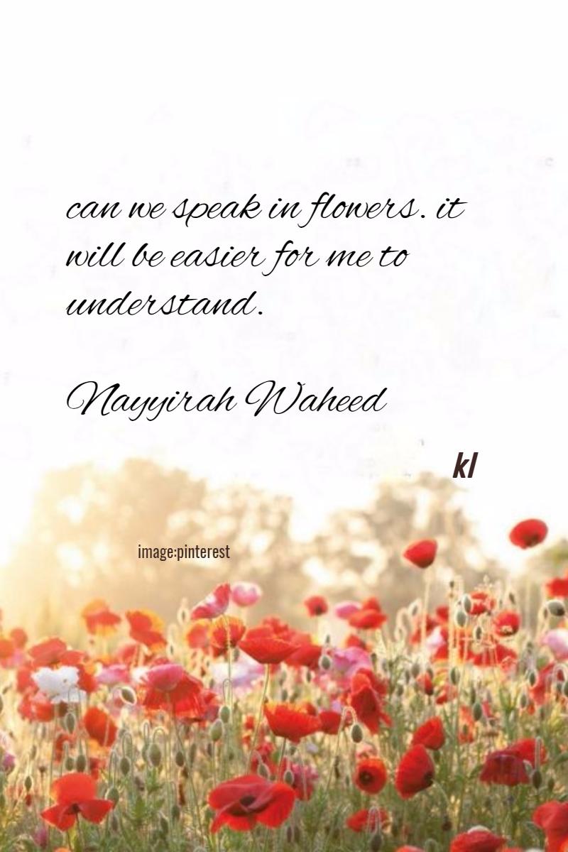 Flower,                Flowering,                Plant,                Text,                Petal,                Poppy,                White,                Red,                 Free Image