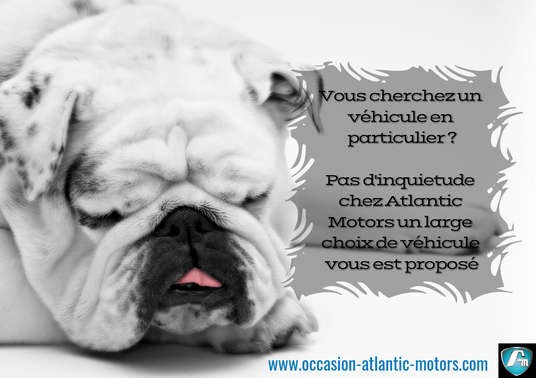 Dog,                Like,                Mammal,                Breed,                Vertebrate,                Funny,                Poster,                Quote,                White,                Black,                 Free Image