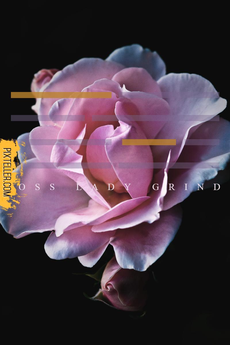Pink,                Flower,                Rose,                Family,                Purple,                Petal,                Simple,                Poster,                White,                Black,                Fuchsia,                 Free Image