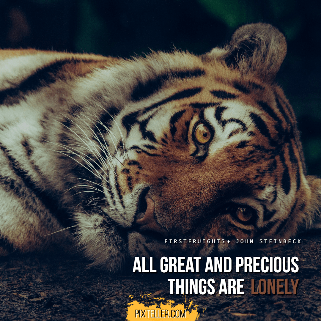 Tiger,                Wildlife,                Mammal,                Fauna,                Big,                Cats,                Poster,                Quote,                Luxury,                Simple,                Black,                 Free Image
