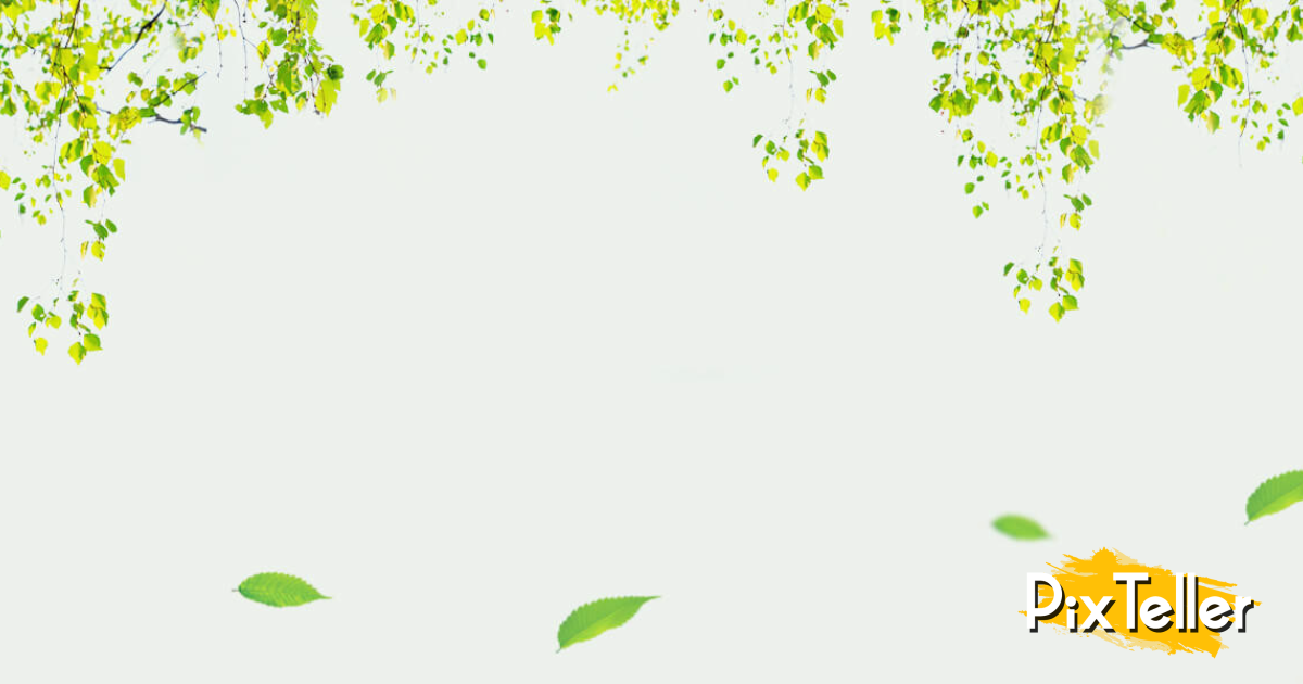 Green,                Leaf,                Flora,                Nature,                Tree,                Backgrounds,                Romantic,                Background,                Image,                Love,                White,                 Free Image