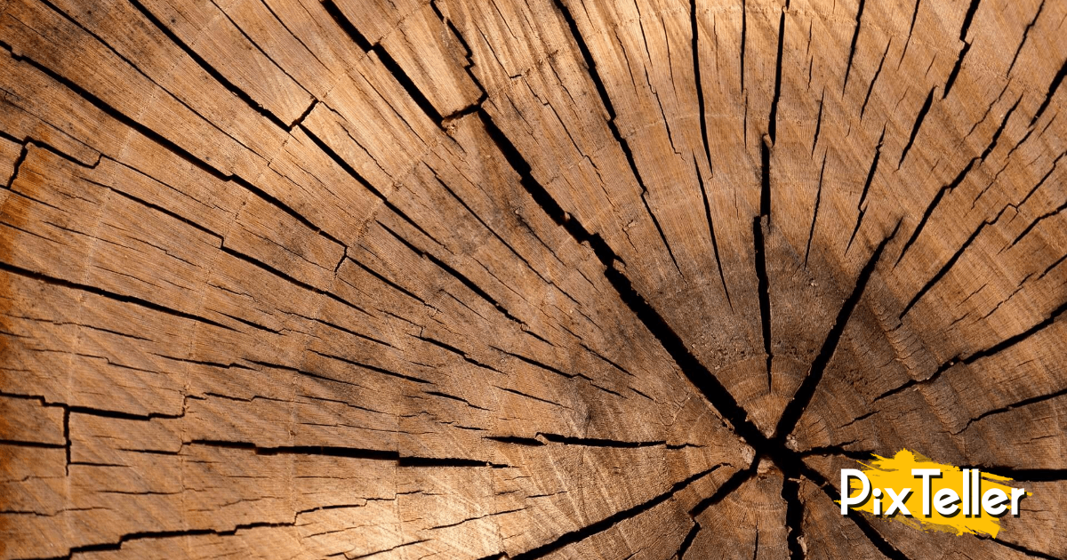 Wood,                Trunk,                Close,                Up,                Tree,                Texture,                Lumber,                Computer,                Wallpaper,                Pattern,                Backgrounds,                Background,                Black,                 Free Image