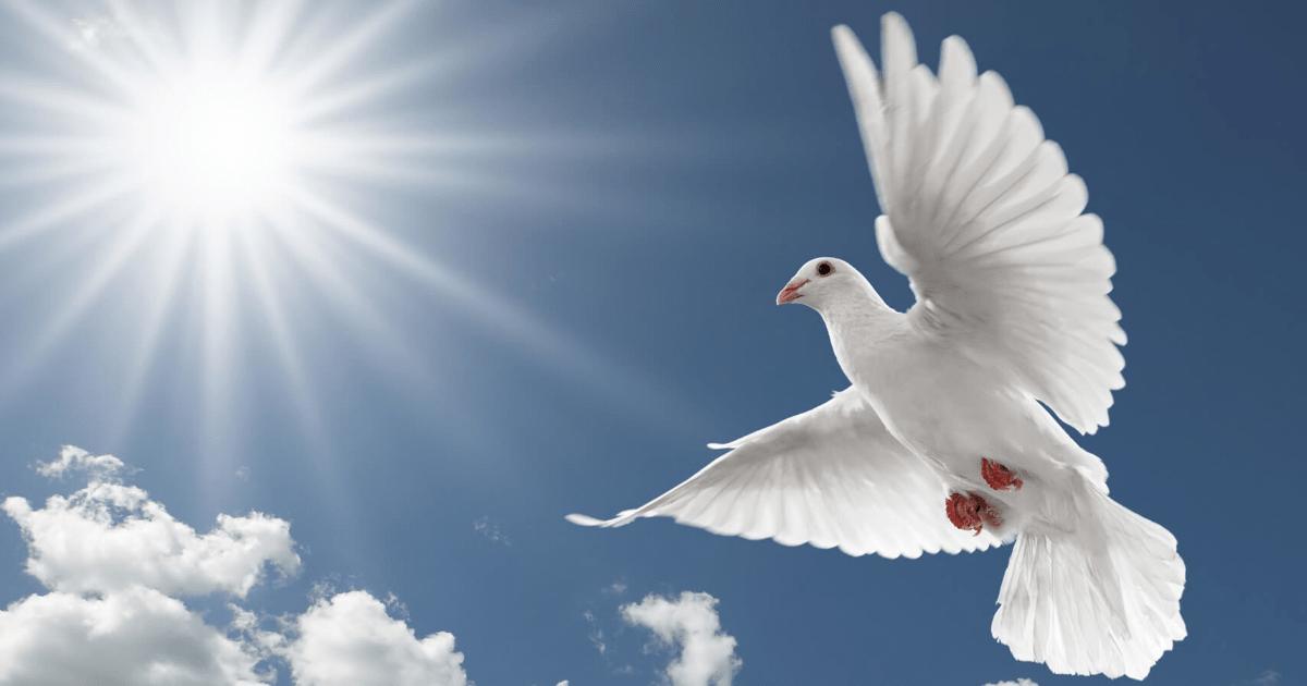 Sky,                Beak,                Bird,                Wing,                Feather,                Gull,                Computer,                Wallpaper,                Cloud,                Seabird,                Backgrounds,                Photography,                Background,                 Free Image