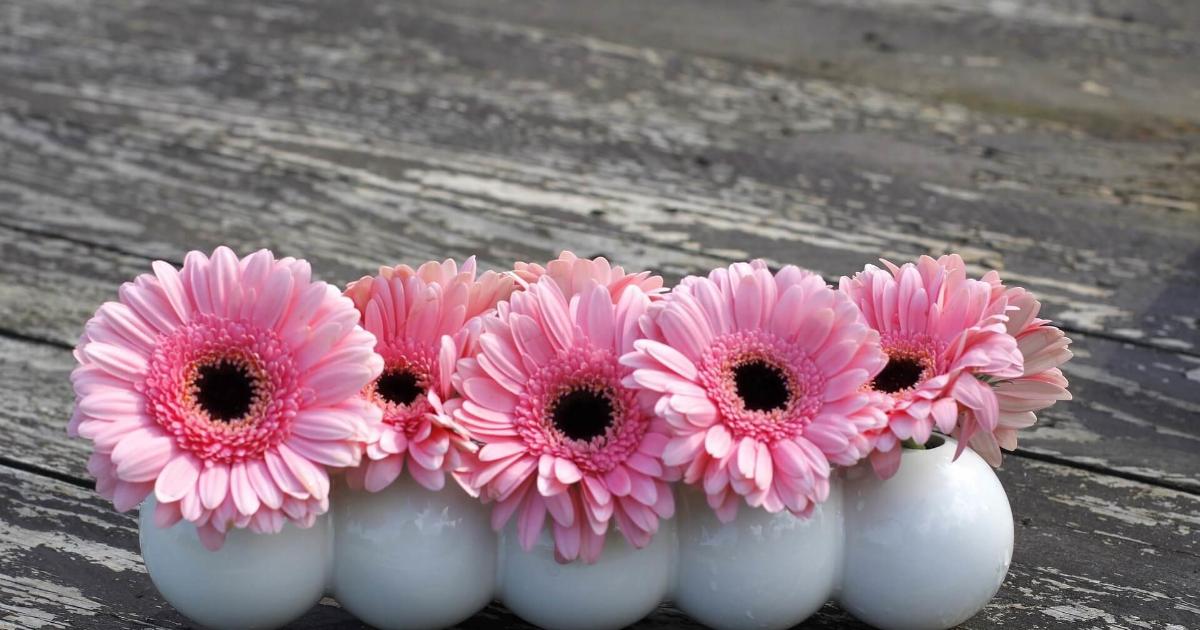 Flower,                Pink,                Gerbera,                Cut,                Flowers,                Floristry,                Petal,                Arranging,                Bouquet,                Daisy,                Artificial,                Backgrounds,                Photography,                 Free Image