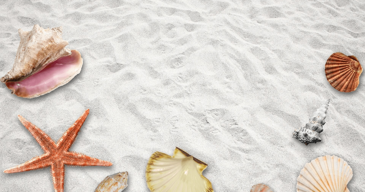 Seashell,                Conchology,                Cockle,                Organism,                Conch,                Clams,                Oysters,                Mussels,                And,                Scallops,                Backgrounds,                Photography,                Background,                 Free Image