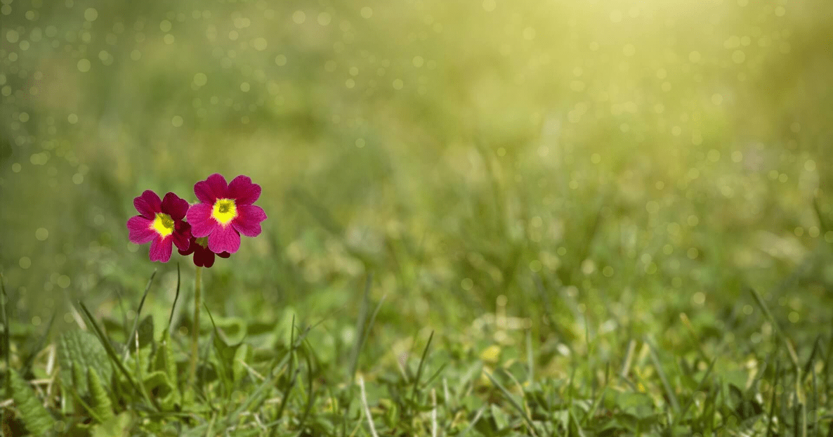 Flower,                Grass,                Wildflower,                Meadow,                Vegetation,                Flora,                Field,                Spring,                Plant,                Grassland,                Backgrounds,                Photography,                Background,                 Free Image