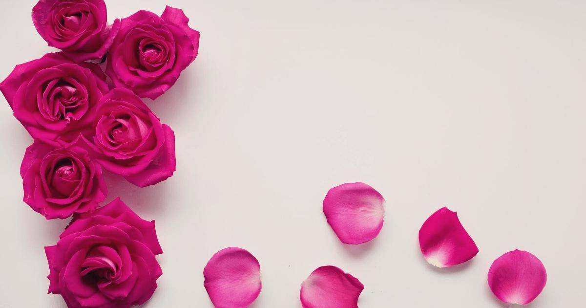 Flower,                Pink,                Rose,                Family,                Garden,                Roses,                Magenta,                Petal,                Cut,                Flowers,                Order,                Flowering,                Plant,                 Free Image