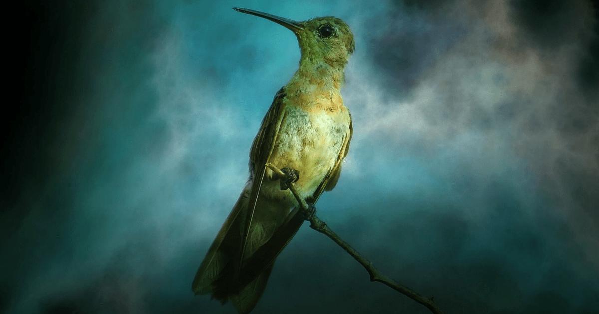 Bird,                Hummingbird,                Beak,                Fauna,                Wildlife,                Organism,                Computer,                Wallpaper,                Wing,                Pollinator,                Backgrounds,                Photography,                Background,                 Free Image