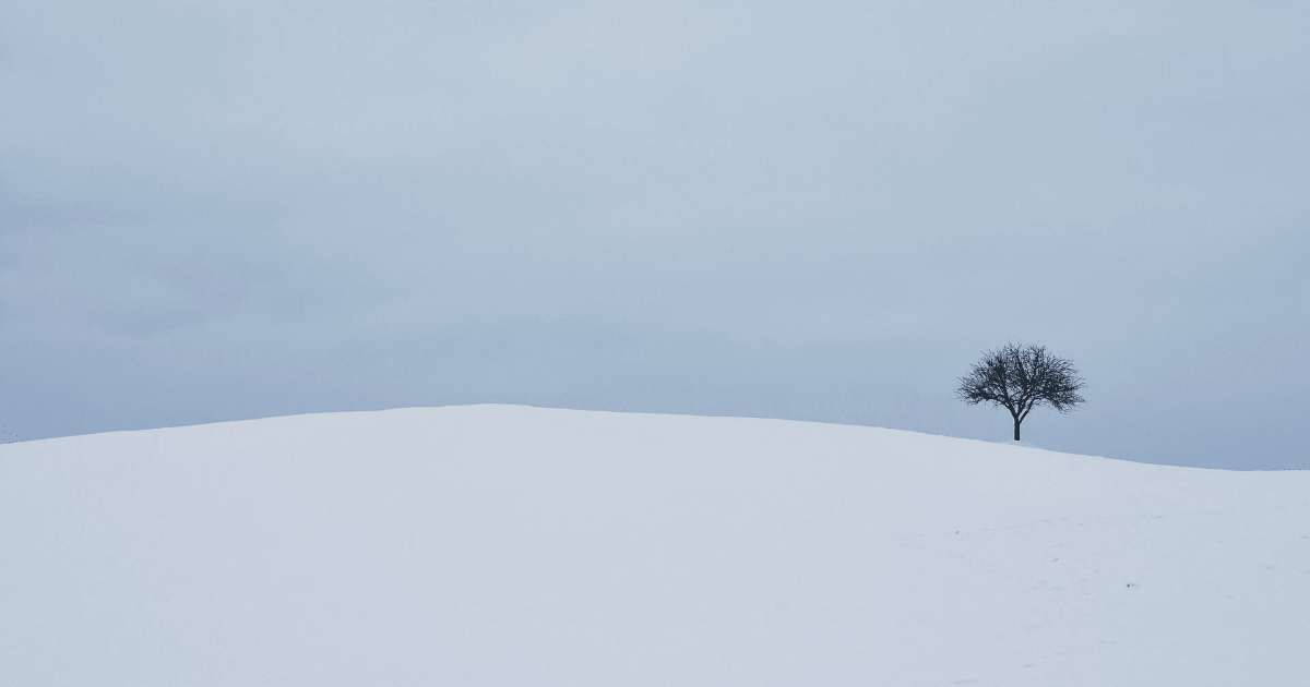 Snow,                Sky,                Winter,                Geological,                Phenomenon,                Tree,                Tundra,                Hill,                Arctic,                Blizzard,                Storm,                Backgrounds,                Photography,                 Free Image