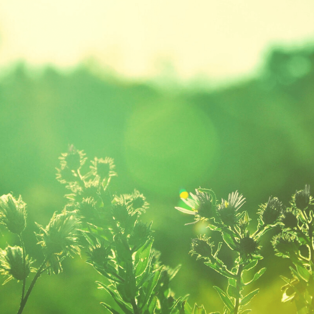 Vegetation,                Green,                Leaf,                Morning,                Grass,                Sunlight,                Sky,                Meadow,                Computer,                Wallpaper,                Branch,                Backgrounds,                Photography,                 Free Image
