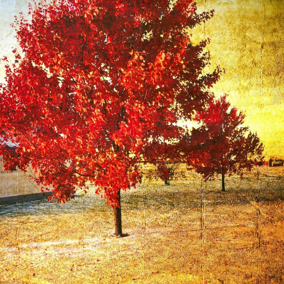 Tree,                Autumn,                Maple,                Leaf,                Deciduous,                Spring,                Sky,                Branch,                Computer,                Wallpaper,                Backgrounds,                Photography,                Background,                 Free Image