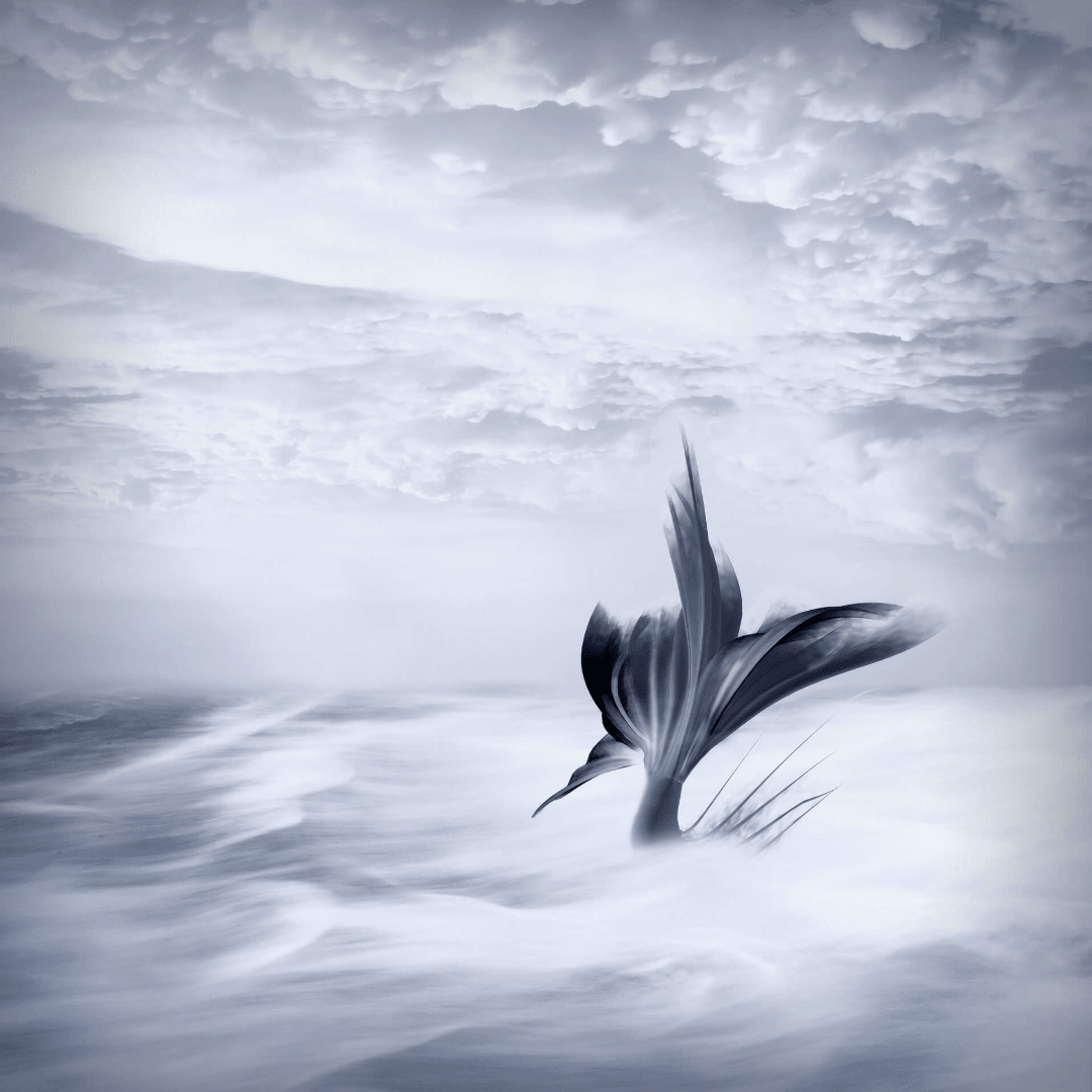 Sky,                Black,                And,                White,                Monochrome,                Photography,                Phenomenon,                Calm,                Atmosphere,                Computer,                Wallpaper,                Cloud,                Backgrounds,                 Free Image