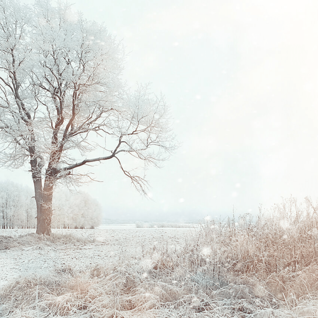Winter,                Frost,                Freezing,                Sky,                Tree,                Snow,                Branch,                Morning,                Fog,                Phenomenon,                Backgrounds,                Photography,                Background,                 Free Image