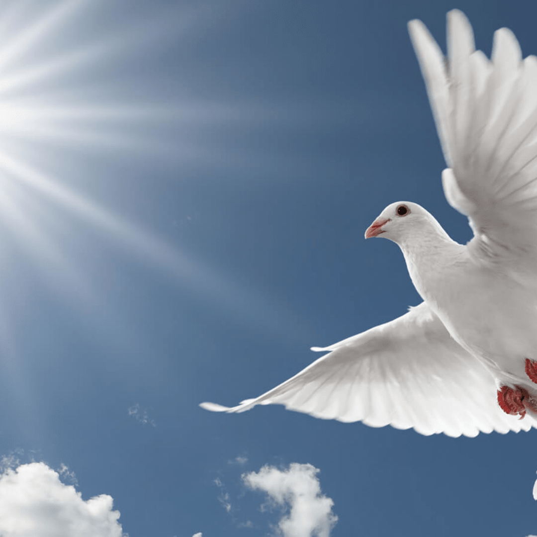 Sky,                Bird,                Beak,                Cloud,                Feather,                Wing,                Gull,                Seabird,                Pigeons,                And,                Doves,                Charadriiformes,                Backgrounds,                 Free Image