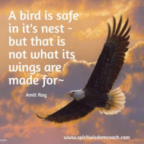 Bird safe