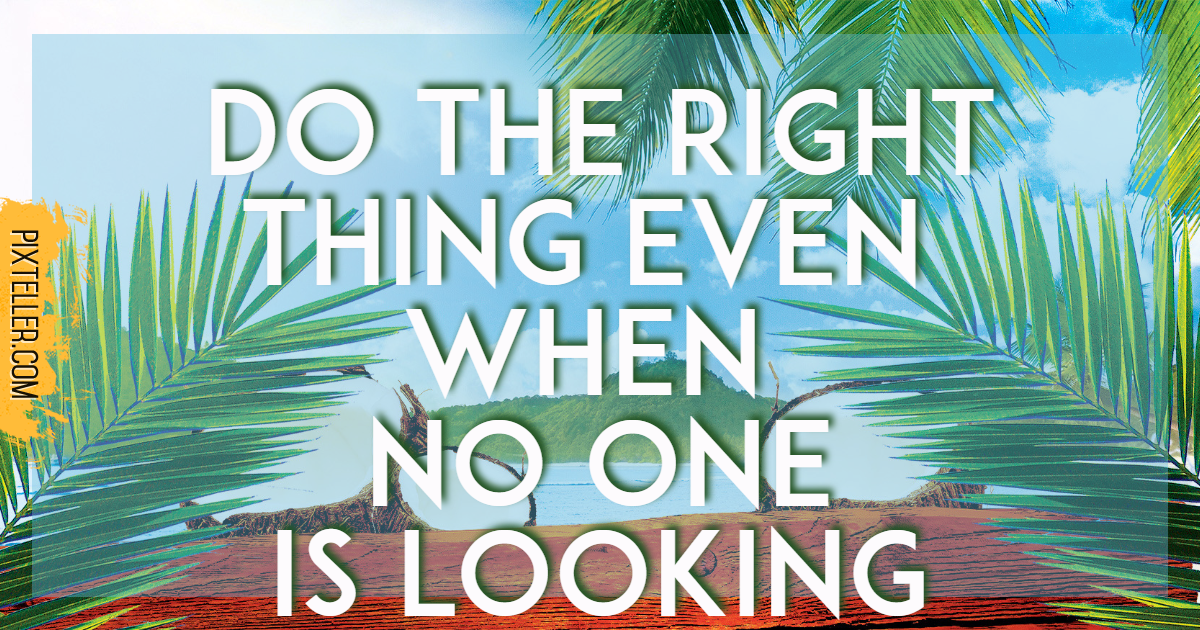 Tree,                Text,                Palm,                Arecales,                Advertising,                Plant,                Organism,                Grass,                Font,                Graphics,                Summer,                Waves,                Beach,                 Free Image