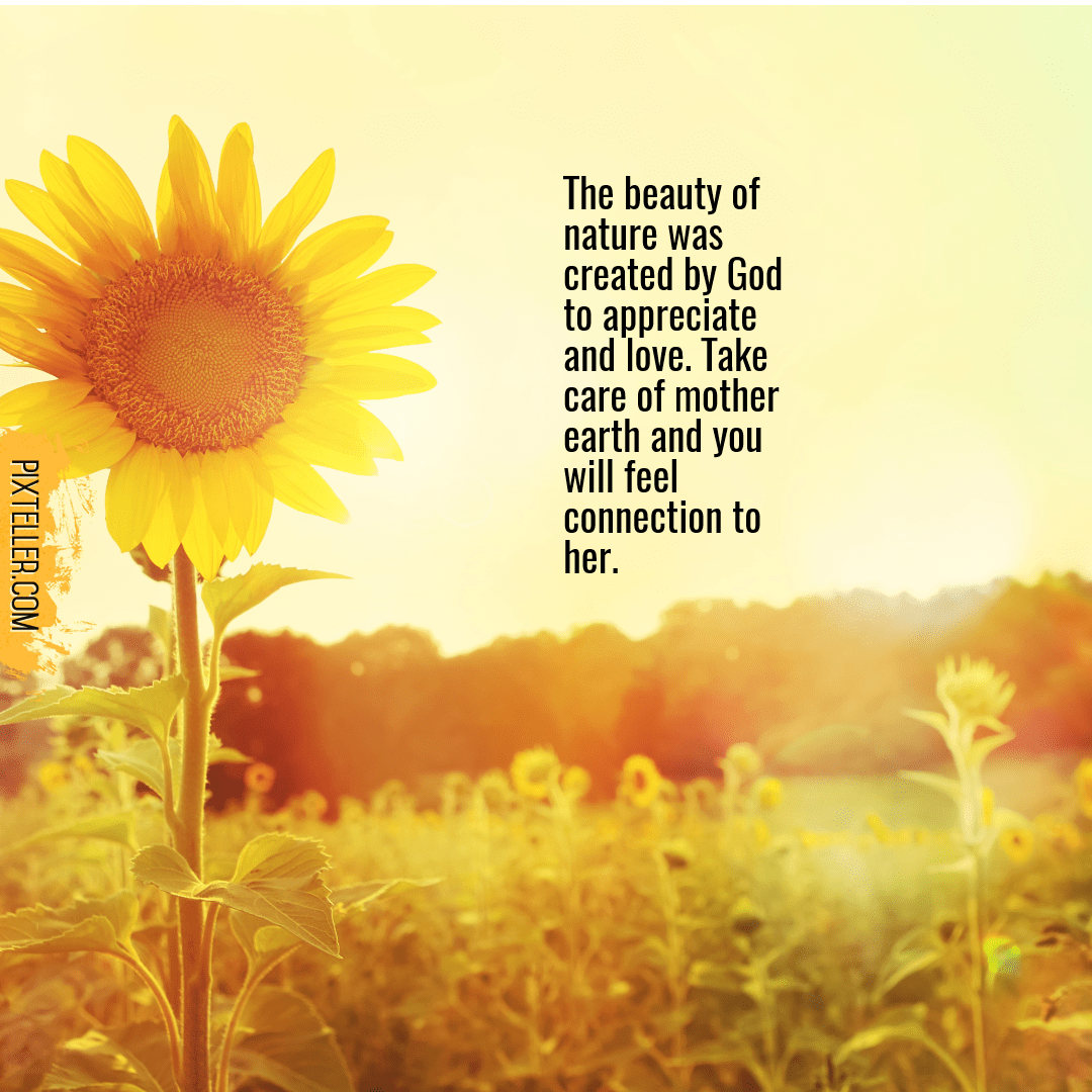 Sunflower,                Flower,                Text,                Morning,                Flowering,                Plant,                Sunlight,                Happiness,                Font,                Field,                Seed,                White,                Yellow,                 Free Image