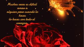 poesia,rosa,roja,ausencia