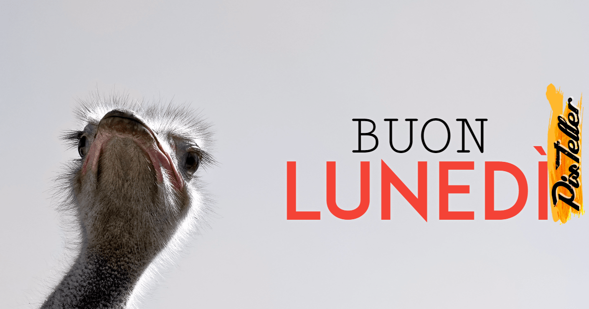 Flightless,                Bird,                Snout,                Fur,                Ostrich,                Font,                Brand,                Funny,                White,                Black,                 Free Image