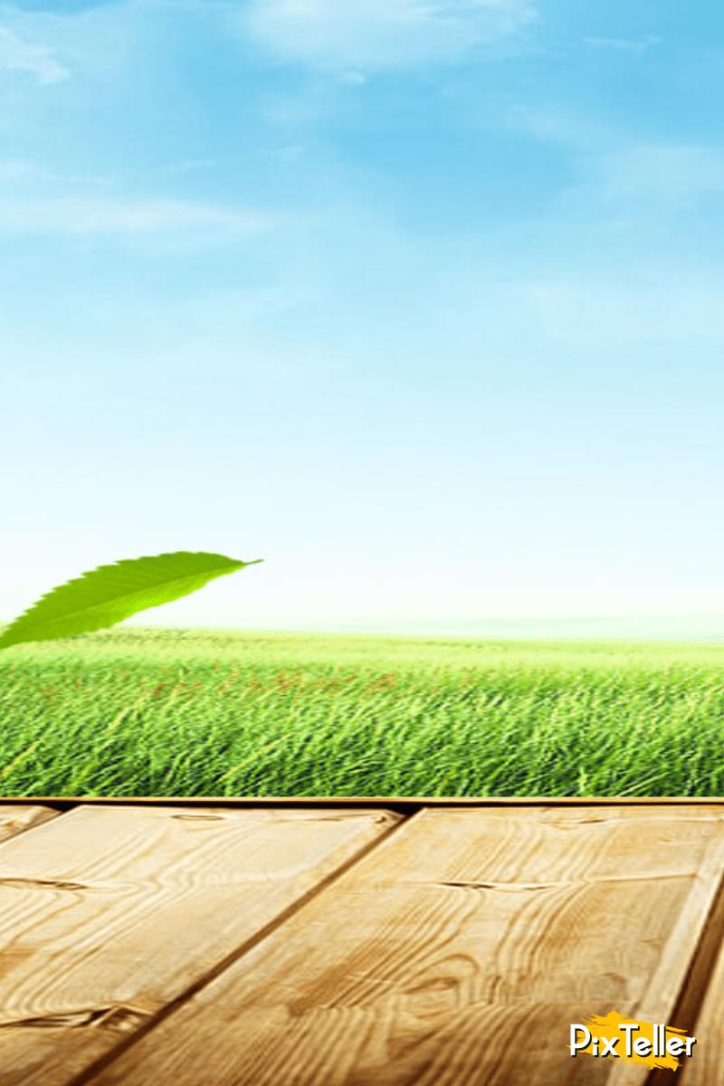 Sky,                Field,                Grass,                Grassland,                Family,                Horizon,                Daytime,                Meadow,                Plain,                Crop,                Backgrounds,                Business,                Background,                 Free Image