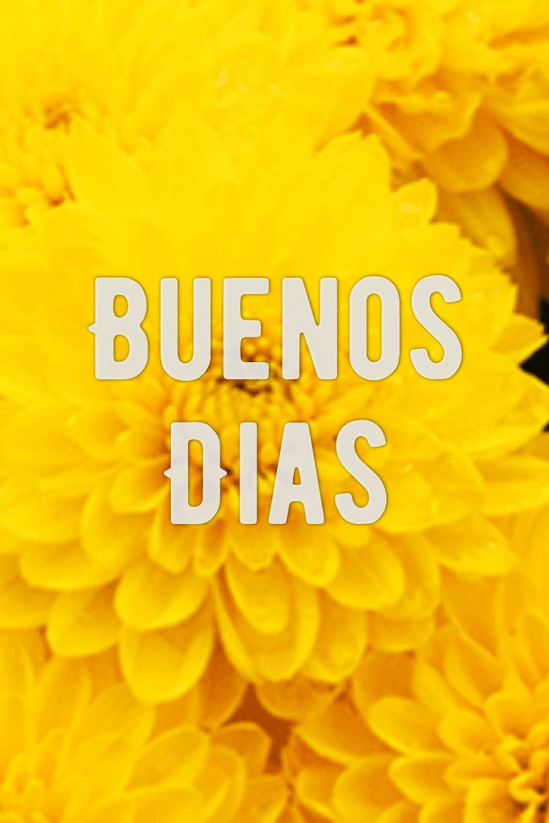 Yellow,                Flower,                Orange,                Sunflower,                Petal,                Computer,                Wallpaper,                Font,                Calendula,                Daisy,                Family,                Chrysanths,                 Free Image