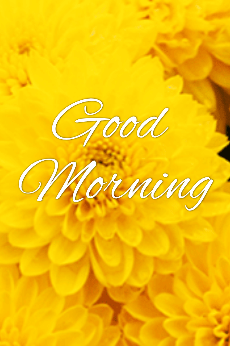 Yellow,                Flower,                Text,                Petal,                Sunflower,                Font,                Computer,                Wallpaper,                Chrysanths,                Daisy,                Family,                Dahlia,                Goodmorning,                 Free Image
