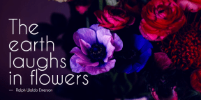 #flower #quote #simple