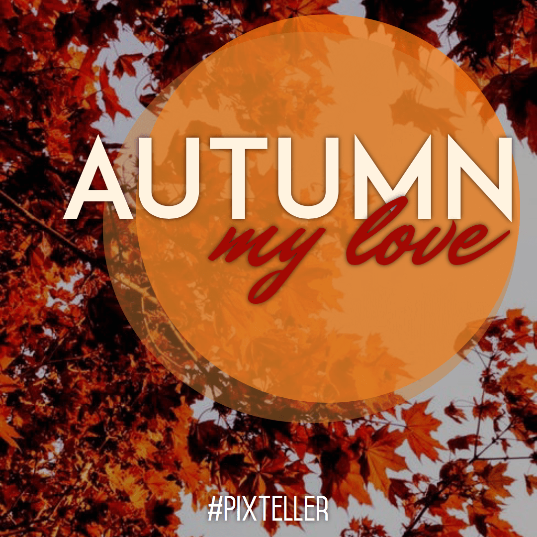 Orange,                Autumn,                Font,                Advertising,                Quote,                Poster,                Fall,                White,                Black,                Yellow,                Red,                 Free Image