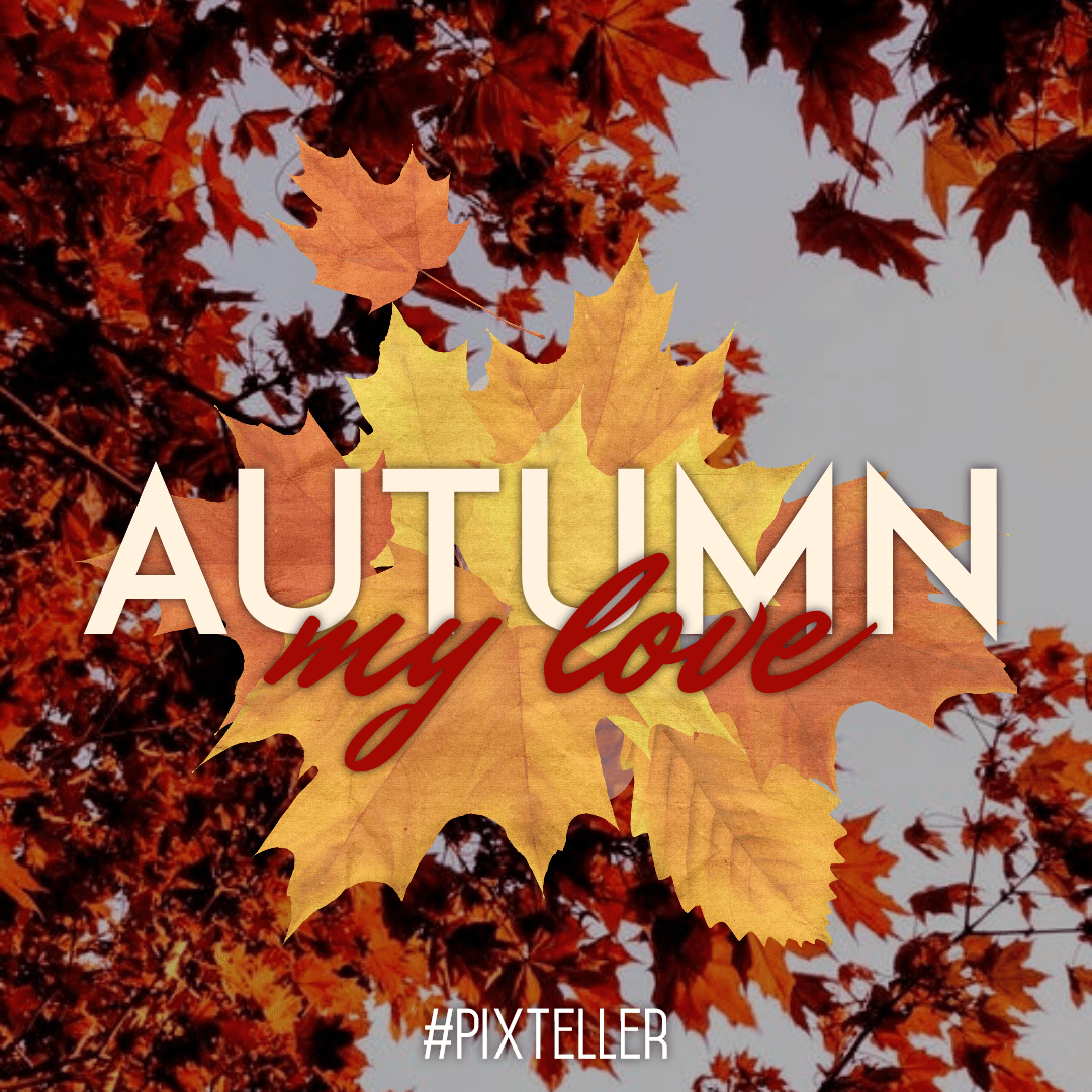 Autumn, Maple, Leaf, Tree, Font, Computer, Wallpaper, Graphics, Deciduous, Quote, Poster, Fall, White,  Free Image