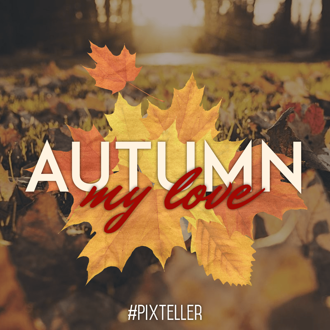 Leaf,                Autumn,                Font,                Maple,                Computer,                Wallpaper,                Graphics,                Tree,                Quote,                Poster,                Fall,                Black,                Yellow,                 Free Image