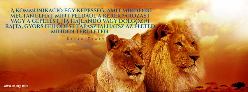 Mammal,                Lion,                Wildlife,                Morning,                Cat,                Like,                Computer,                Wallpaper,                Organism,                Photo,                Caption,                Snout,                Big,                 Free Image