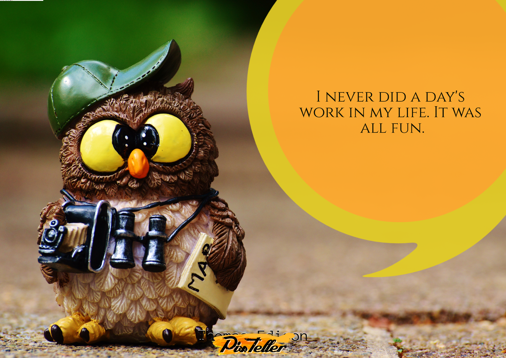 Owl,                Fauna,                Beak,                Photo,                Caption,                Computer,                Wallpaper,                Font,                Funny,                Quote,                Poster,                Avatar,                White,                 Free Image