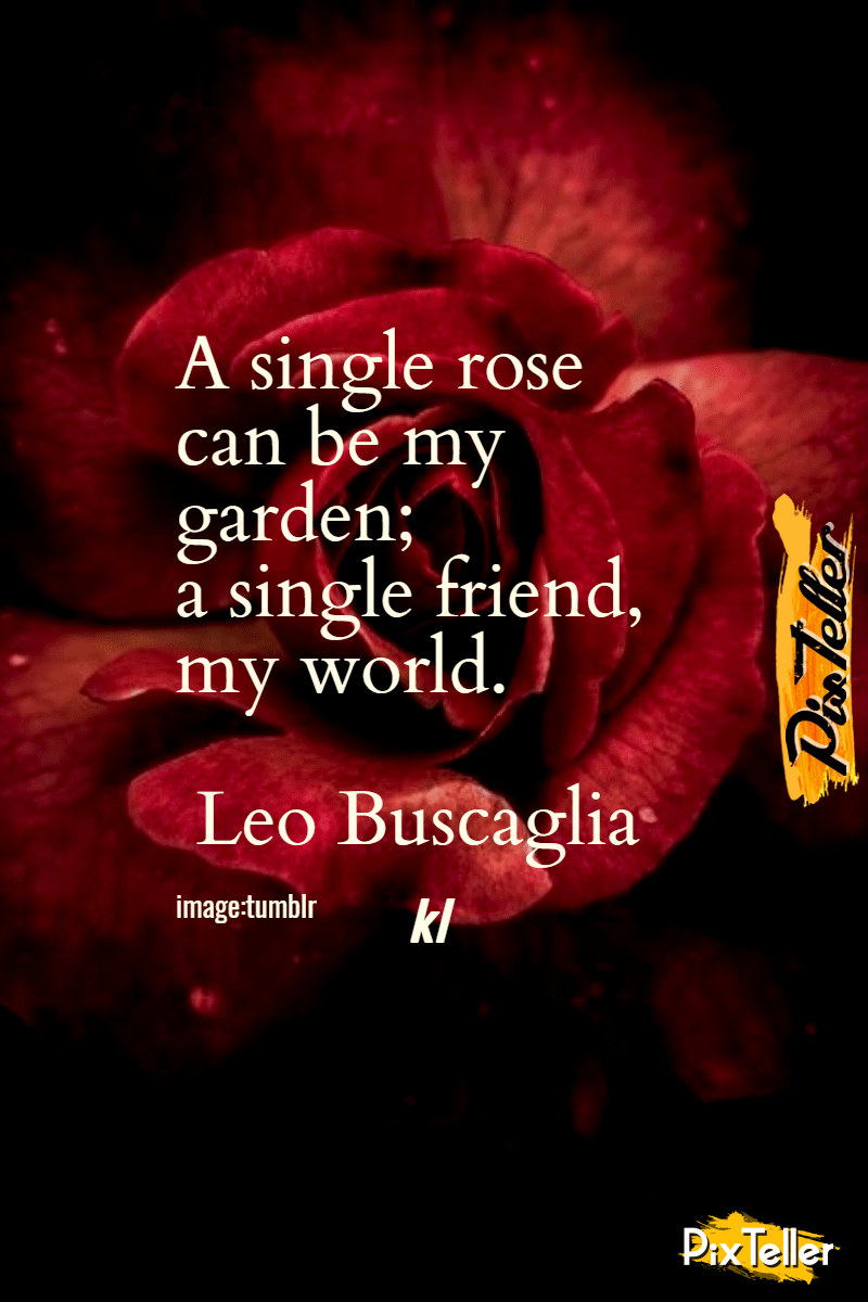 Text,                Love,                Rose,                Family,                Garden,                Roses,                Darkness,                Petal,                Font,                Valentine's,                Day,                Computer,                Wallpaper,                 Free Image