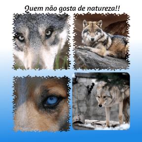 #lobos #natureza