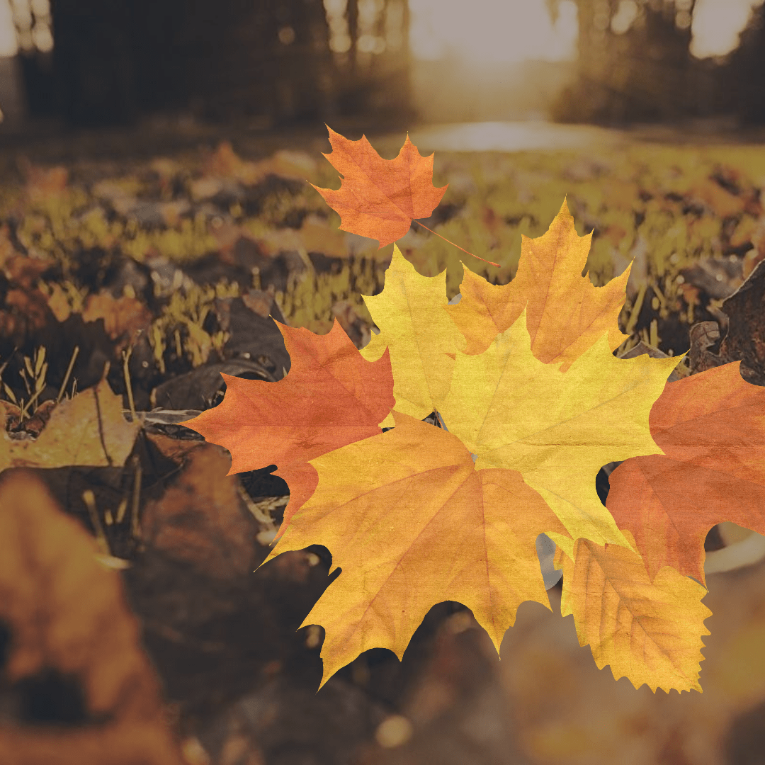 Leaf,                Autumn,                Maple,                Deciduous,                Computer,                Wallpaper,                Tree,                Quote,                Poster,                Fall,                Black,                Yellow,                Red,                 Free Image