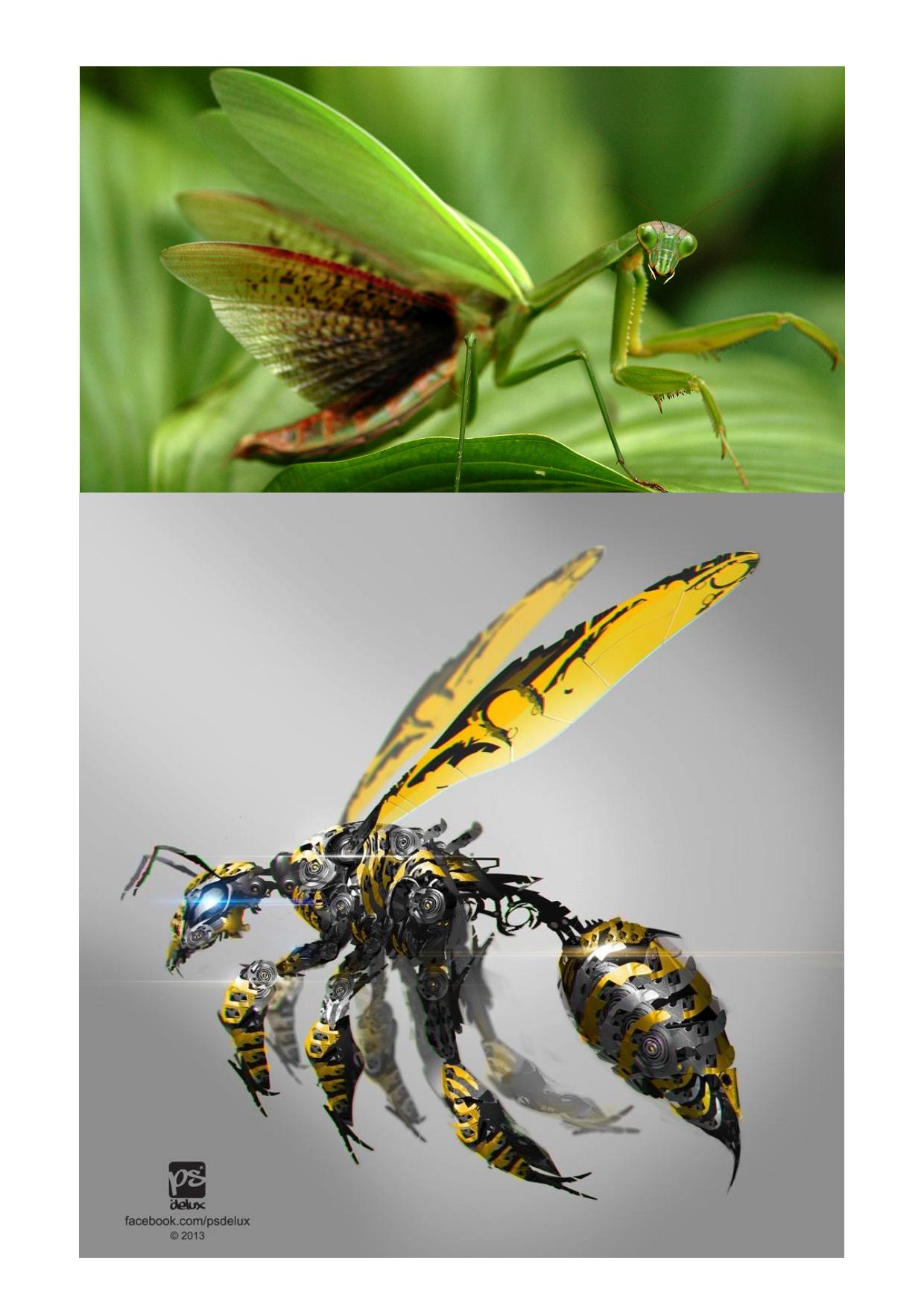 White,                Black,                Yellow,                Lime,                 Free Image
