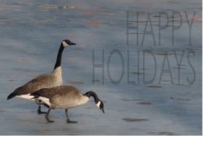 christmas geese 1