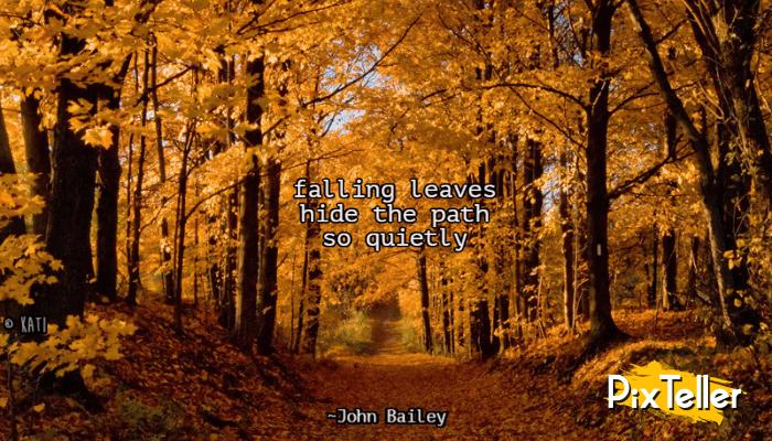 Fall,                Leaves,                Haiku,                Quote,                Black,                Red,                 Free Image