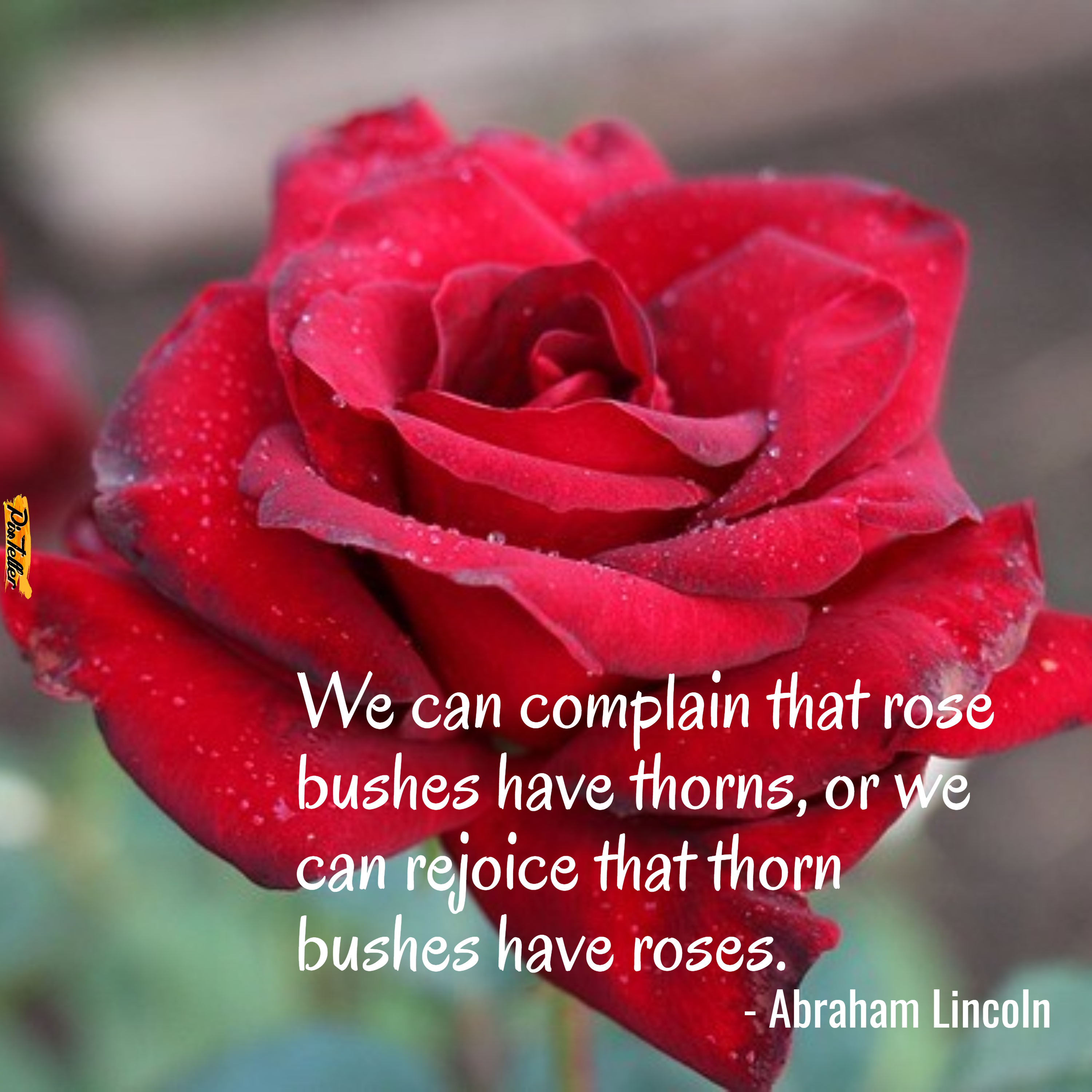 Abraham Lincoln Roses And Thorns Design Customize Download It