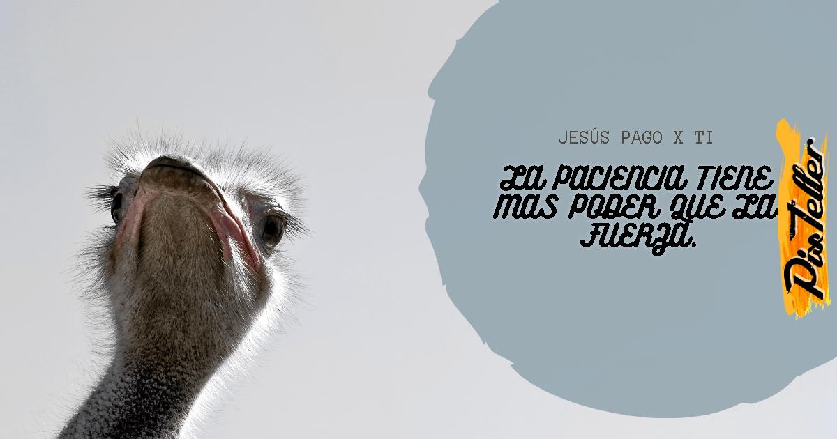 Ostrich,                Flightless,                Bird,                Snout,                Beak,                Ratite,                Fur,                Photo,                Caption,                Advertising,                Brand,                Funny,                White,                 Free Image